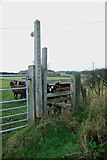 SJ7933 : Stile and footpath with rare breed sheep by Mick Malpass