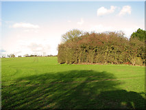 TM1763 : Cultivated field north of The Butts, Debenham by Evelyn Simak