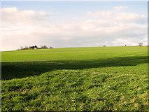 TM1763 : A crop of winter wheat at Little London Hill, Debenham by Evelyn Simak
