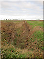 TL5690 : Dry ditch off Willow Row Drove by Hugh Venables