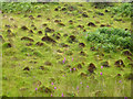 SN7673 : A field of ant hills near the Hafod Estate by Phil Champion
