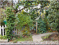 TQ2075 : Jungle with wheely-bin and lamp-post: front gardens at the Model Cottages, East Sheen by Stefan Czapski