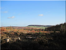 SE6091 : Cleared  section  of  Forest by Martin Dawes