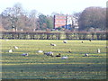 TQ0451 : Clandon House, Clandon Park by Colin Smith