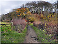 SJ9489 : Goyt Valley Way at Chadkirk by David Dixon
