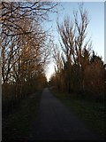 SE5946 : York to Selby cycle path at Naburn by DS Pugh