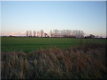 SE6045 : Farmland from the Selby cycle path by DS Pugh