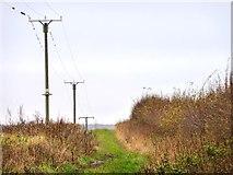 SE4832 : Telegraph poles along New Lane by Christine Johnstone