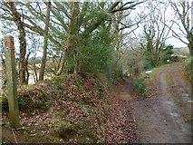 SU7824 : Sussex Border Path north of Durleighmarsh Farm by Shazz