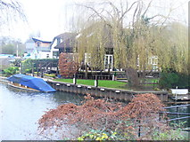 TQ0866 : Riverside, Shepperton by Colin Smith