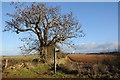 SP0125 : The Cotswold Way near Belas Knap by Philip Halling