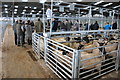 SO4742 : Sheep sales, Hereford Livestock Market by Philip Halling