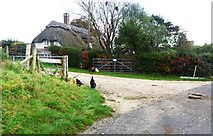 SY9282 : Thatched cottage and chickens, East Creech by nick macneill