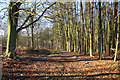 SK6068 : Hanger Hill Wood by Richard Croft