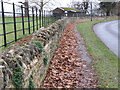 TL0893 : Leaf litter by the cricket ground by Michael Trolove