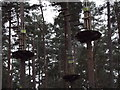 SU8142 : Go Ape in the Pines by Colin Smith