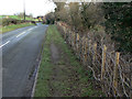 SE4527 : New laid hedge by Alan Murray-Rust