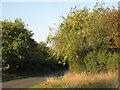 SP1664 : Crabapple tree by Pettiford Lane by Robin Stott