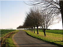 TF8825 : Country lane past Raynham Hall by Evelyn Simak