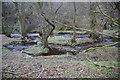 SD6914 : Islands in Eagley Brook by Bill Boaden