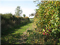 SP1764 : Footpath past a berried hedge by Robin Stott