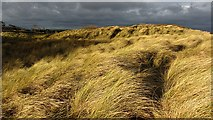 NT6281 : Dunes, Ravensheugh Sands by Richard Webb