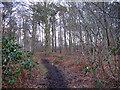 SJ6369 : Woodland track near Whitegate by Stephen Craven