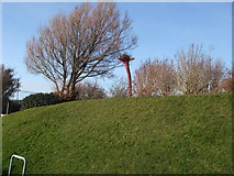 TQ3303 : Unusual shaped tree in East Brighton Park by Paul Gillett