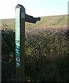 SU5255 : Finger postat Meadham Lane by Graham Horn