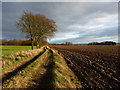SJ7312 : Along the track towards Middle Wood by Richard Law