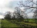 SE2005 : Trees along a stream near Spicer House by Christine Johnstone