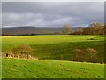 NY5942 : Pasture, Kirkoswald by Andrew Smith