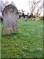 ST9929 : Snowdrops in the churchyard, Fovant by Maigheach-gheal