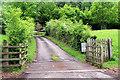 SD3896 : Track leading to Harrow Slack, Windermere, Cumbria by Christine Matthews