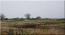 TQ7178 : Munition factory ruins by N Chadwick