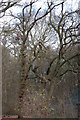 TQ7693 : Winter Trees in Giddings Copse by John Myers