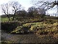 SD7215 : Woodland on the moor by Philip Platt