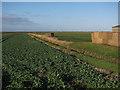 TL6692 : Pillbox by Poppylot Farm by Hugh Venables
