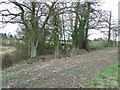 TL7955 : Scarecrows in the trees by Keith Evans