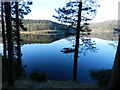 SK1791 : Upper Derwent Reservoir; conifers by Peter Barr