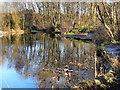 SJ7789 : Timperley Flood Storage Basin by David Dixon