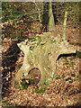 SP9207 : Gnarled tree stump, Browns Lane by Rob Farrow