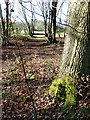 SP9207 : Woodland strip along Browns Lane by Rob Farrow