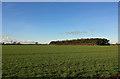 SE7227 : Woodland strip near Knedlington by Peter Church