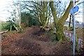 SJ5671 : Path on the Delamere Loop by Jeff Buck