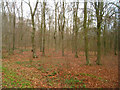 SU5341 : Deciduous woodland by Given Up