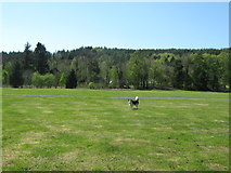 NX4564 : An open space in Kirroughtree Forest by Ann Cook