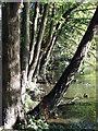 TQ2595 : Greenhill Park by Christine Westerback