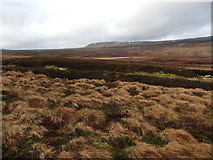 NY8221 : Lune Head Moss by David Brown