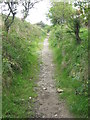 SE9999 : Bridleway near Staintondale by T  Eyre